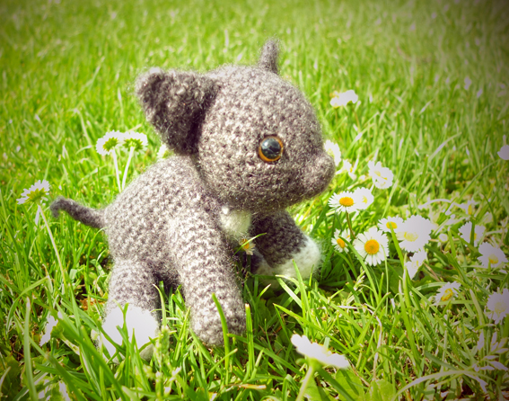 kitten_web.jpg